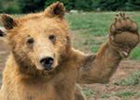 Fear of the Bear Gives Active ETFs a Boost