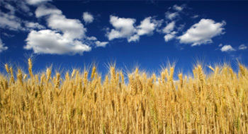 Sprott and Ceres Partners team up to launch farmland fund