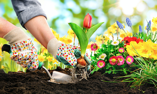 Tending the roots of employee wellness: A look at workplace gardens
