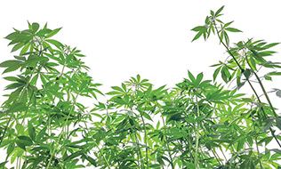 Is it time for institutional investors to consider the cannabis sector?