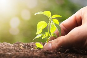 MSCI makes ESG rating tool available to public
