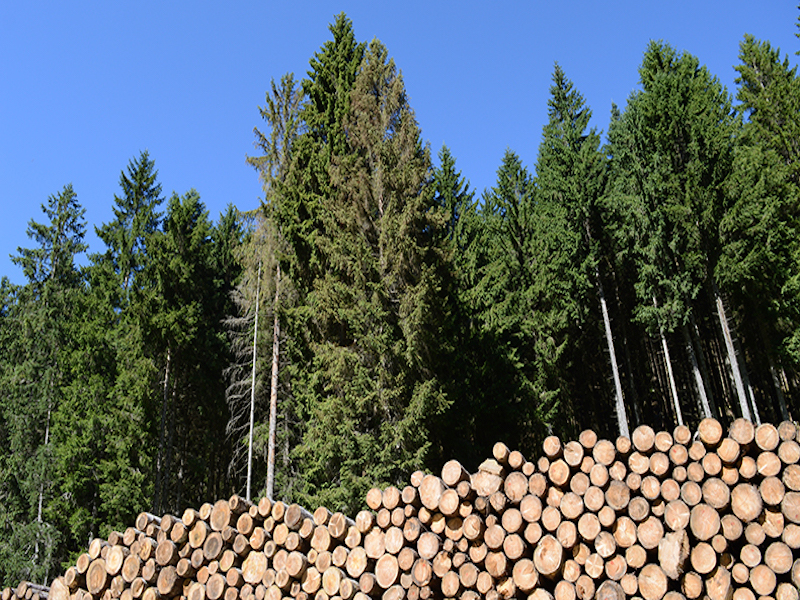 Eacom Timber workers reach agreement with pension, benefits improvements