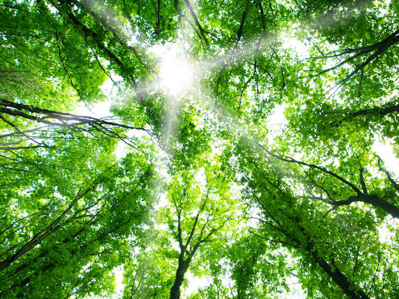 Bâtirente continuing to reduce carbon footprint of investments